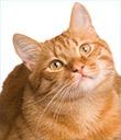 Sponsor a Cat Spay/Neuter
