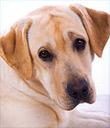 Sponsor a Dog Spay/Neuter